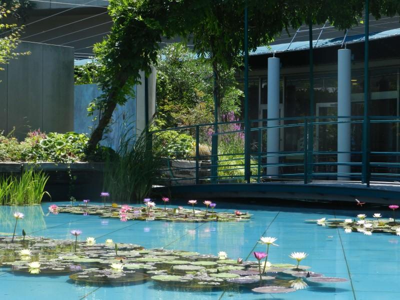 モネの「大睡蓮」と池