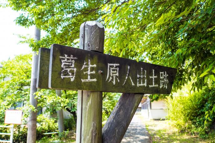 20170619_kodaimura-213