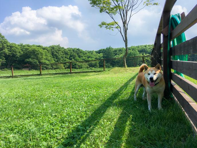 karuizawa-dog-2135