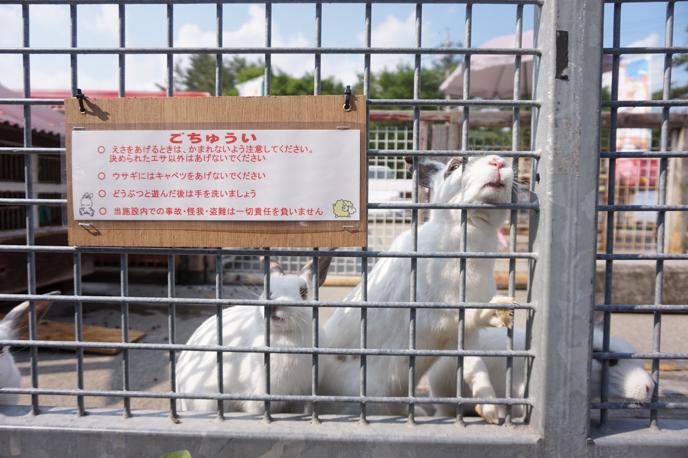karuizawa-dog-07079