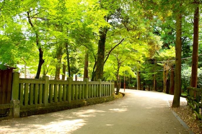 夏場は緑が美しい道です
