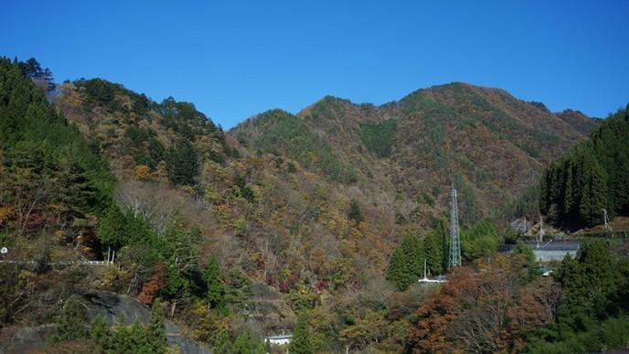この広大な山の中で、罠を踏み抜いてもらうという。すごい!