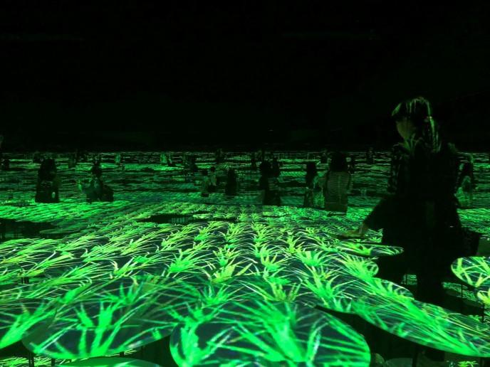『地形の記憶』実際の季節によって投影される植物の様子が変わります
