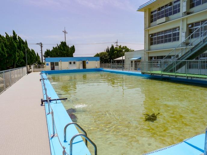 プールの水は太平洋から汲み上げたもの