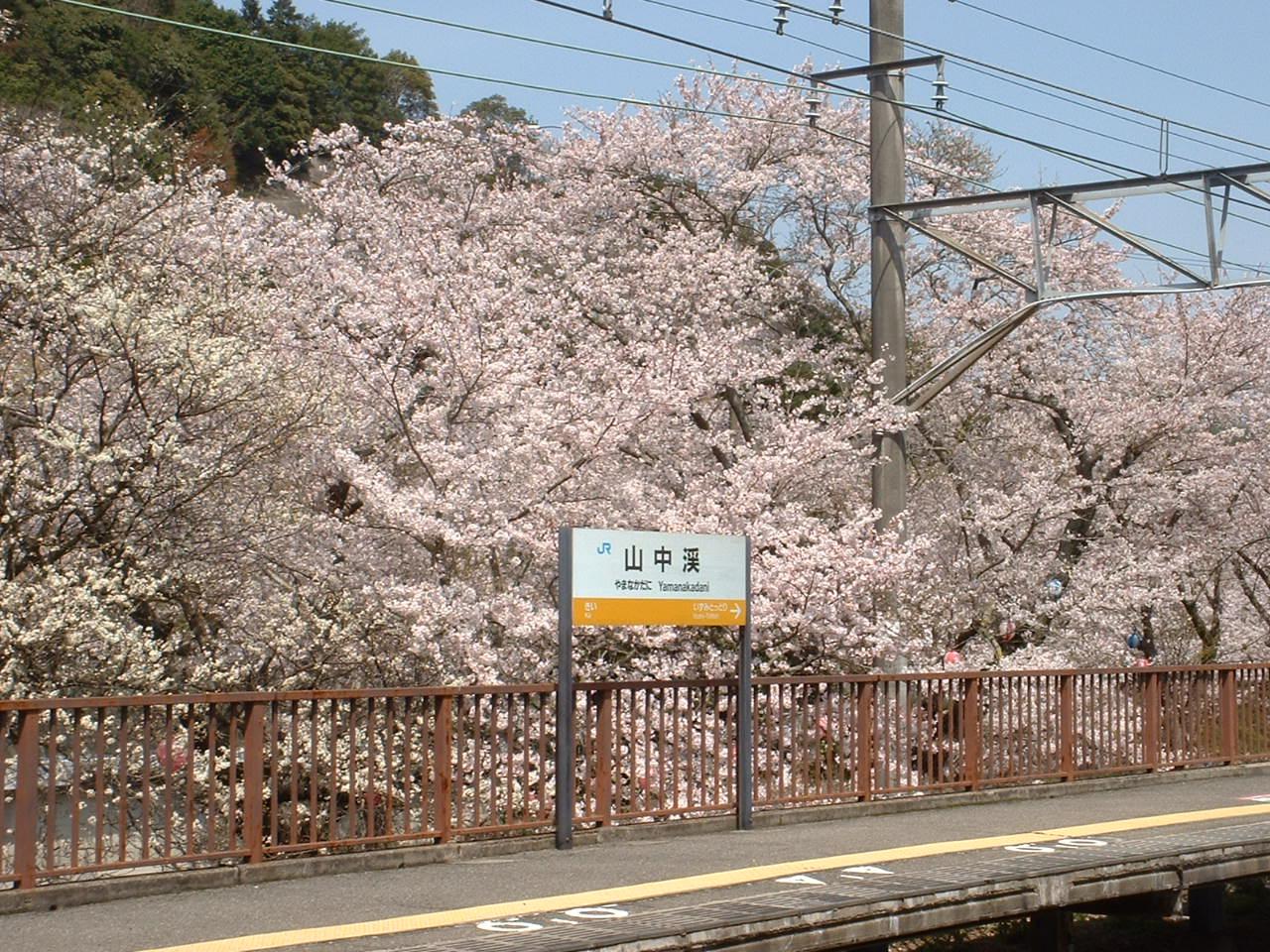 桜の山中渓駅