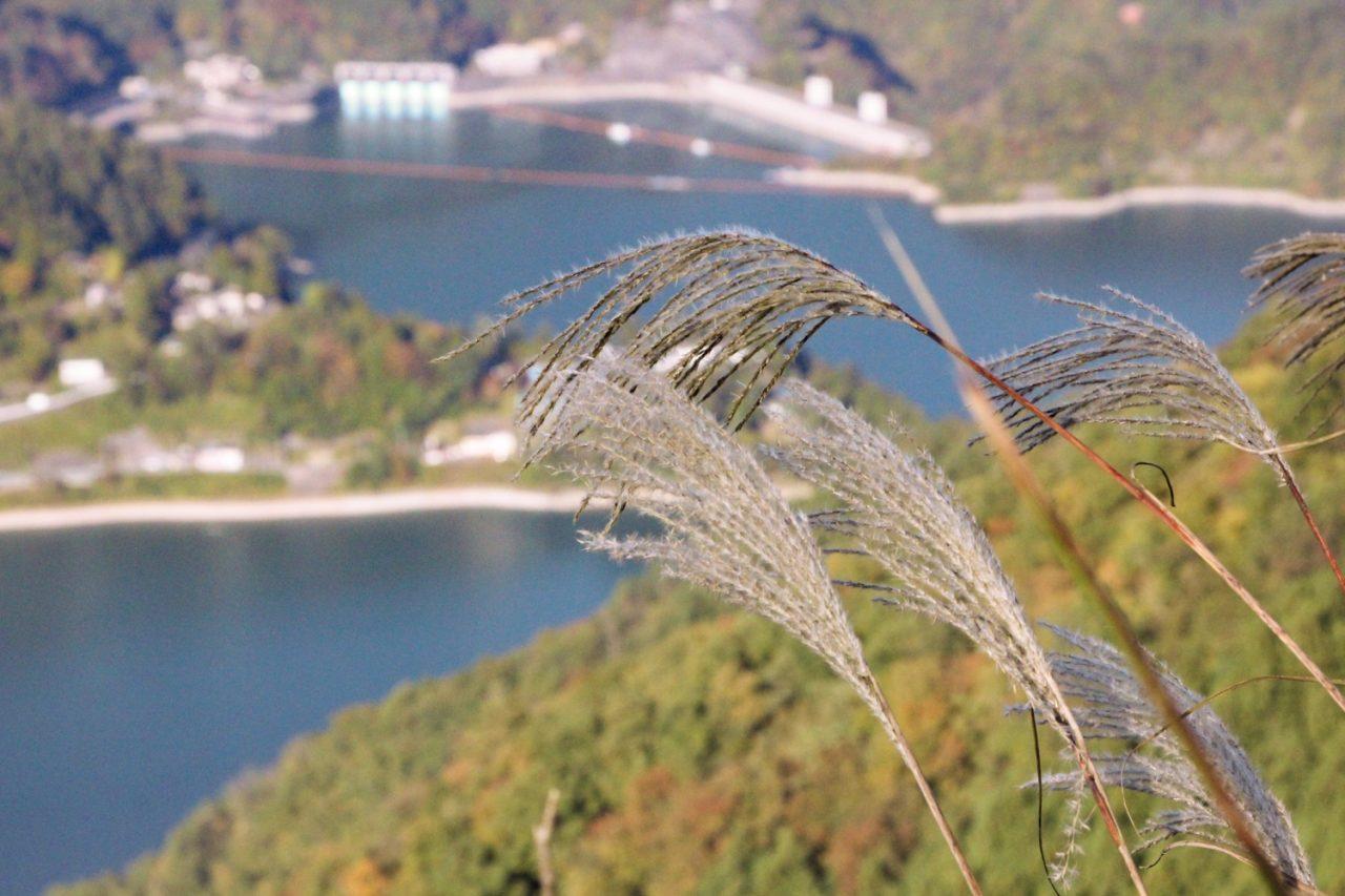 spot_okutama_3
