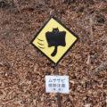 【軽井沢の星野エリアを気軽に楽しむ!】おひとり日帰り湯治プランや、最新のお得なお宿「BEB5 軽井沢」をご紹介。