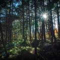 【神秘の原生林】もののけの森を歩こう!白駒池周辺の楽しみ方を地元民がご紹介