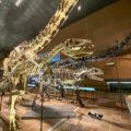 北九州市立いのちのたび博物館に行くべき10の理由