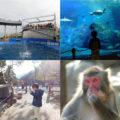 【大分】うみたまごと高崎山をセットで満喫!4歳息子と猿とイルカで1日中遊んできた