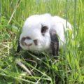 うさぎさんの飼い主必見!ペットの楽しむ姿がみられるRabbit Park FUJISAWAに行ってみた