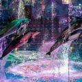 映像が美しいだけじゃない!本格的なドルフィンショーが見られる「マクセル アクアパーク品川」