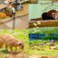 かわいい生きもの多めで開放的!千葉市動物公園に行ってみた